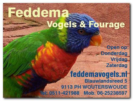 sample2 adv feddema